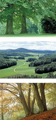 Trees, Nature, Forest